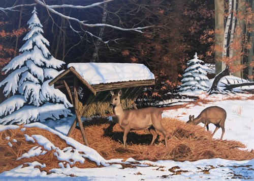 Roe deer by the pasture |  50cm na 70cm