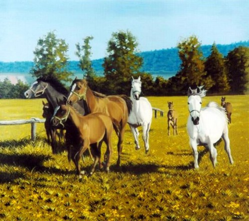 Horses on the Meadow   80 x 90 cm